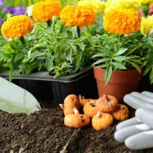 Fiori, piante e Accessori
