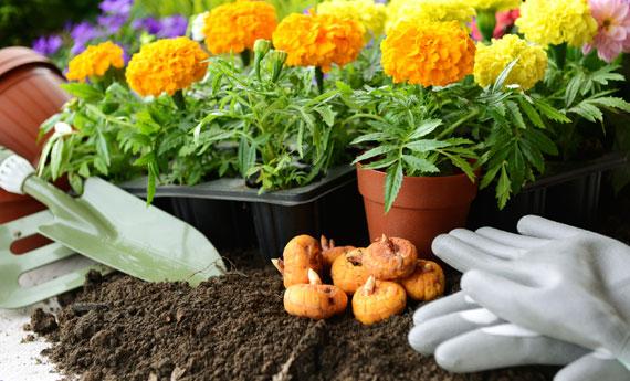 Fiori-da-piantare-a-fine-aprile.jpg