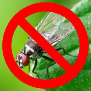 Linea anti mosche