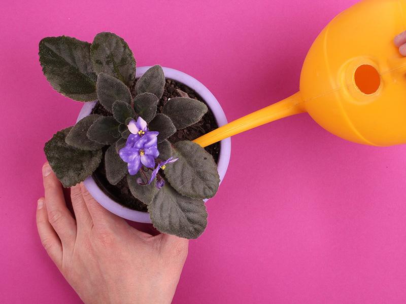 cura-e-protezione-piante.jpg