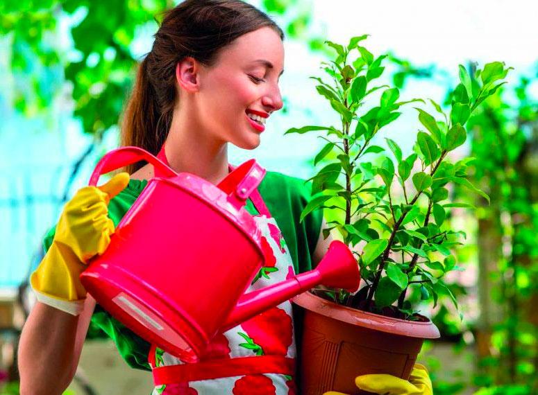 Sementi e cura delle piante