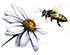 Enologia e apicoltura
