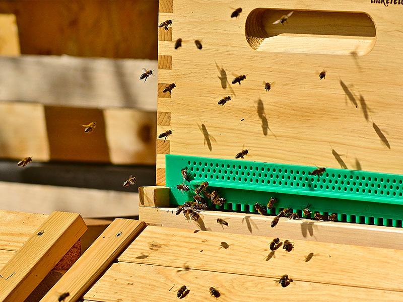 Prodotti per l'apicoltura