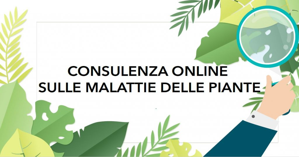 CONSULENZA-ONLINE-MALATTIE-1024x540-1.jpg