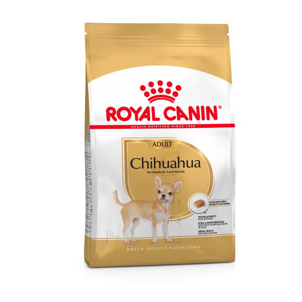 Chihuana adult