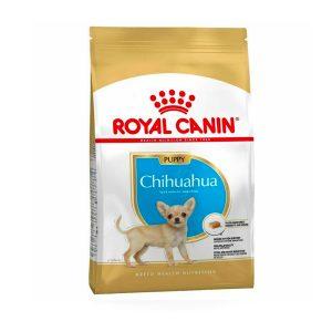 Chihuana puppy